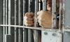 Менеджера из Подмосковья, оговорившего себя про убийство жены и детей, оставили в тюрьме