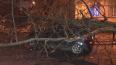Петербург потерял три сотни деревьев из-за ночного ...