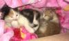 Жители дома на Димитрова пытаются пристроить котят, найденных в моторном отсеке