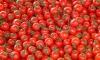 За ноябрь в Петербурге подорожали помидоры, но подешевел сахар