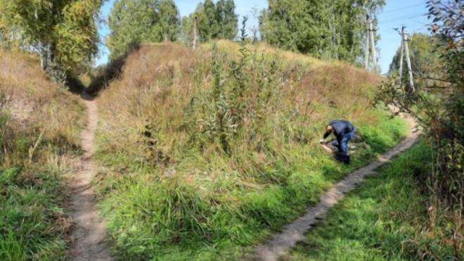 В Новосибирской области в лесу нашли тело женщины с пробитой головой