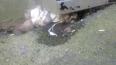 Жуткие фото: на Васильевском острове зоофил изнасиловал ...
