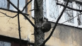 На Суздальском спасатели сняли с дерева агрессивного ...