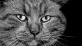 В Петербурге живодер застрелил из арбалета кота Тимофея