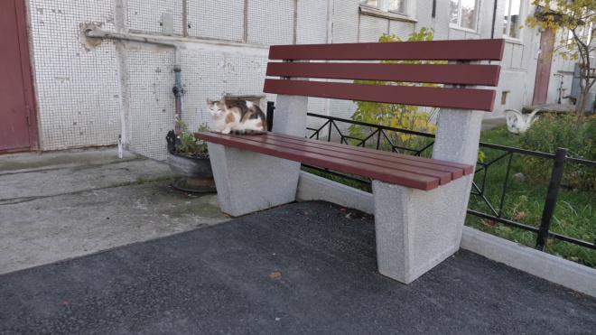 Тепловые карты котов появятся в Петербурге