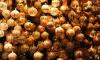Грандиозный праздник: Рождественская ярмарка в Петербурге обойдется в 19 миллионов рублей