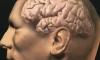 Ученые смогут восстанавливать потерянную память