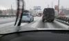 Шушары и Кудрово накрыла снежная буря