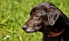 В Ленобласти депутат убил собаку при детях