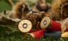 После пожара в Сестрорецке спасатели нашли винтовки, гранаты, пистолеты