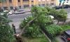 На Таврической упавшее дерево придавило три иномарки и перекрыло улицу