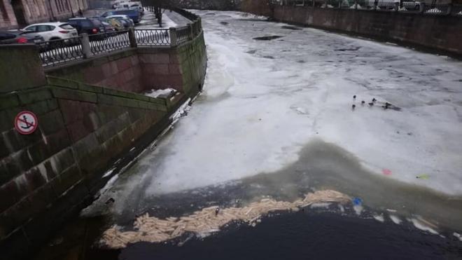Петербуржцы ужаснулись массовому сбросу хлеба в реку Карповку