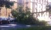 Упавшее дерево помяло Mercedes на Большой Пушкарской