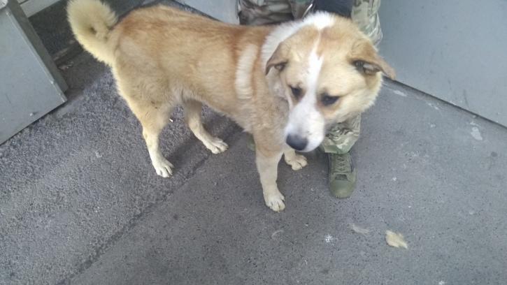 В этом году в Петербурге чипировали почти 700 бездомных собак