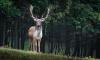Разрешение на добычу охотничьих ресурсов можно оформить на портале госуслуг Ленобласти