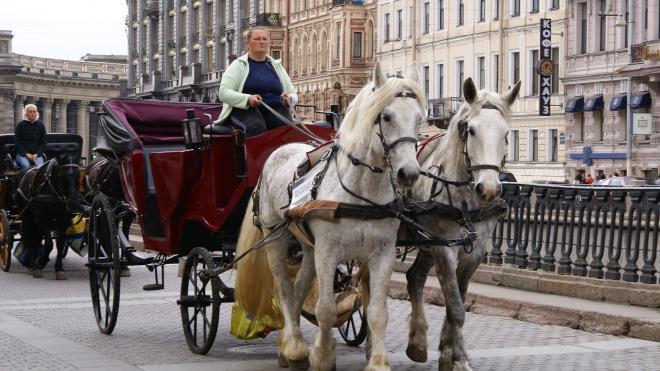 В Петербурге хотят определить места, где можно кататься на лошадях