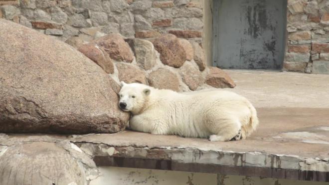 В Ленинградском зоопарке рассказали, чем кормят животных в условиях коронавируса