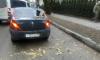 В Калининграде ветер повалил дерево на машину такси