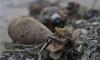 На Санкт-Петербургском шоссе обнаружен схрон артиллерийских снарядов
