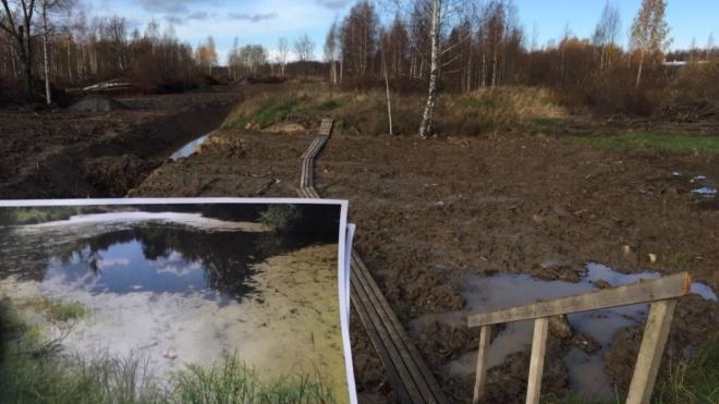 В Петербурге возбудят2 уголовных дела после уничтожения пруда в Петродворцовом районе