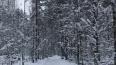 МЧС: ночью в Ленобласти может похолодать до -20 градусов