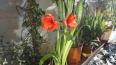 Фотофакт: фантастические розы зацвели зимой на станции ...