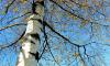 В петергофском парке обнаружили труп мужчины со следами удушения