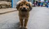 Суд Петербурга запретил освобождать животных после отлова
