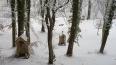В Петербурге осудили вандалов, разрушивших 34 могилы ...