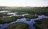 """В заказнике """"Сестрорецкое болото"""" завершат строительство эко-тропы"""