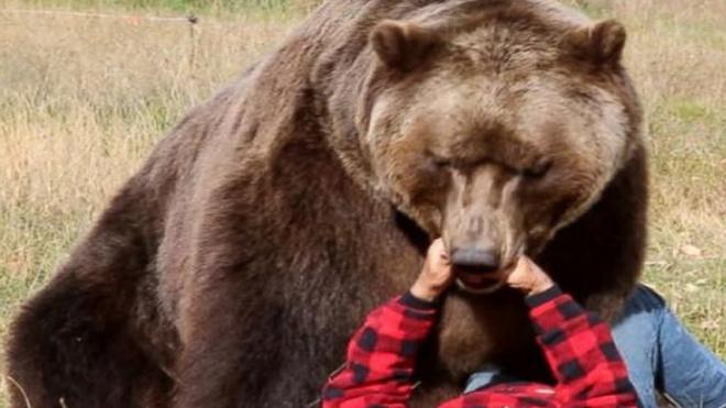 В Тыве мужчина откусил дикому медведю язык и спасся