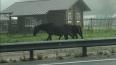 На Выборгском шоссе заметили бесхозную лошадь