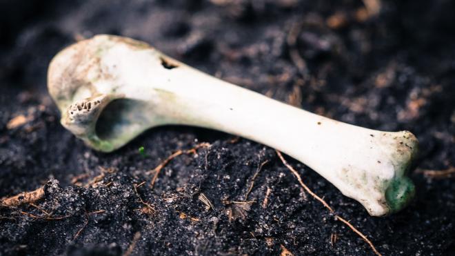 У крематория на Ручьевской дороге нашли скелетированный труп мужчины