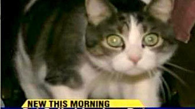 Американский кот стал присяжным заседателем