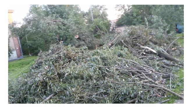 В Красногвардейском районе полсотни деревьев пострадали от незаконной вырубки