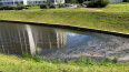 """Петербуржцы жалуются на неприятный запах от реки в МО """"У..."""