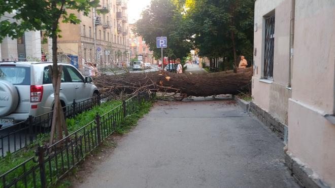 Фото: на Социалистической улице рухнуло дерево