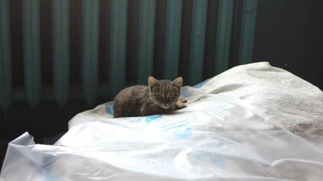 """Бывшие работники """"Севкабеля"""" просят спасти оставшихся на заводе котов"""