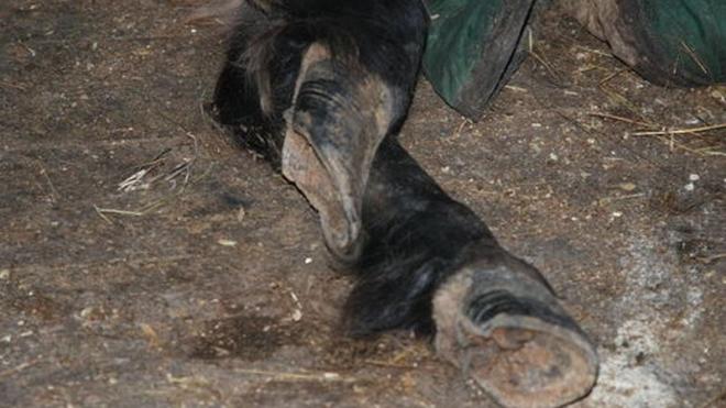 В Ленобласти зверски убили лошадь