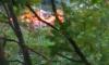 На Стойкости неизвестные подожгли сухие ветки: разгорелся пожар
