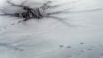 В Приморском районе под лед провалилась машина с женщино...