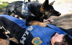 К Федерации военного собаководства накопились вопросы у ее бывших сотрудников. Вот что стало ответом
