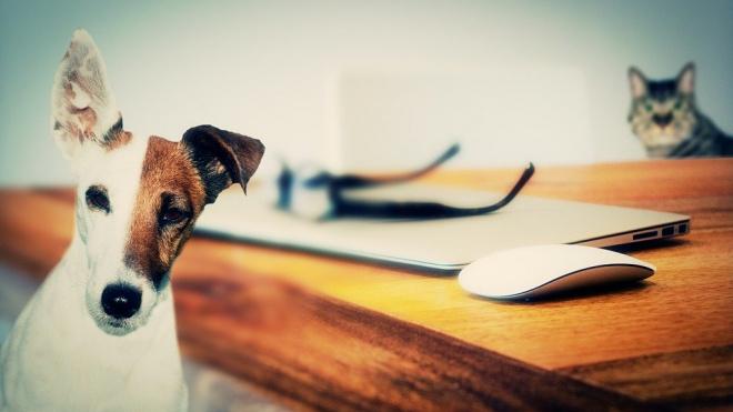 Кошки и собаки не болеют коронавирусом и не могут быть носителями