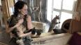 Певица Чичерина завела огромного мейн-куна из Петербурга