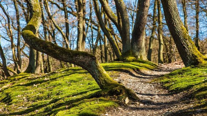 В заказнике в Лисьем Носу появится детский экологический маршрут