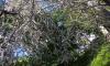 Петербуржцы боятся сидеть под деревьями из-за гусениц