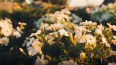 Цветочный магазин мешает петербуржцам спать