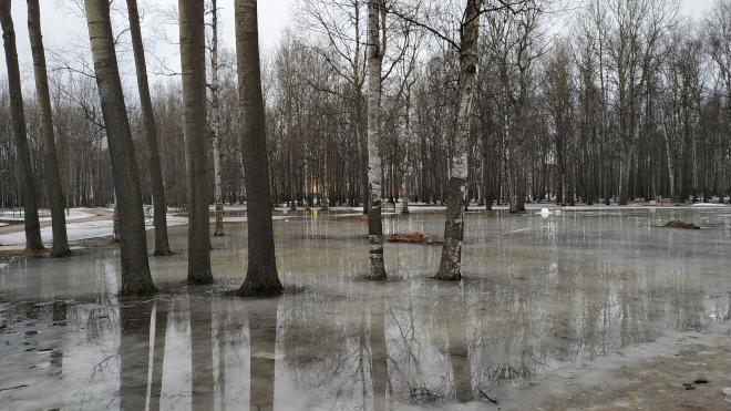 Девять зеленых зон Петербурга уже открыли после просушки