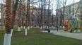 В Московском районе деревья украсили георгиевскими ...