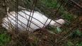 После жестокого убийства козы в Ленобласти завели ...